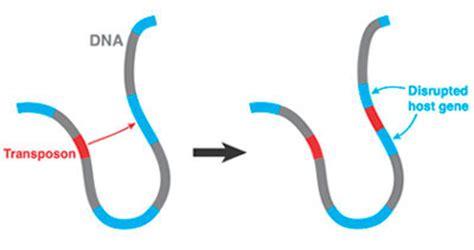 Transposable Elements TE in Plasmids Biology